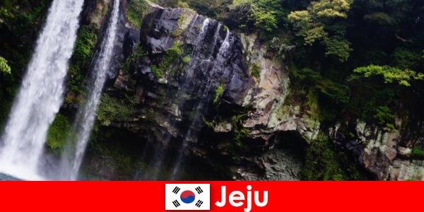 Чеджу в Южной Корее, субтропический вулканический остров с захватывающими дух лесами для иностранцев.