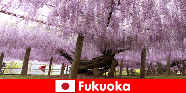 Поездки на природу для незнакомцев по нетронутой природе Фукуока, Япония